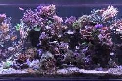 Peter's fish tank - episode 3.1 - eye candy
