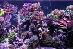 Peter's fish tank - episode 1 - 1350 gallon tank overview